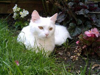 White deaf kitten 1 year 1024 2