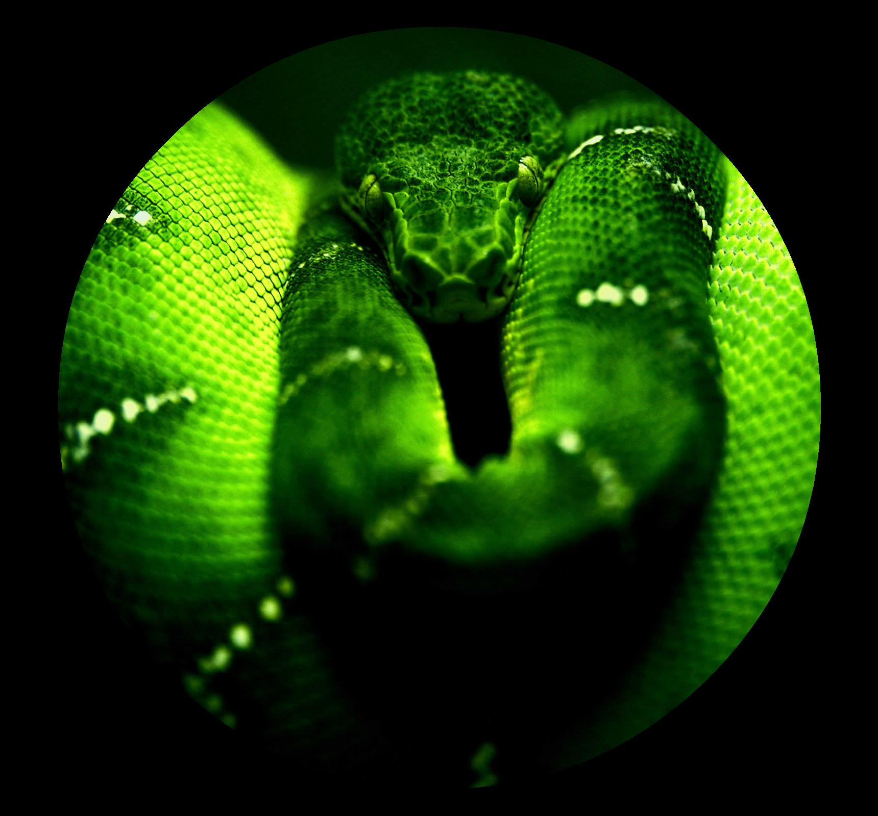 image green snake hd wallpaper free hd for desktop png animal