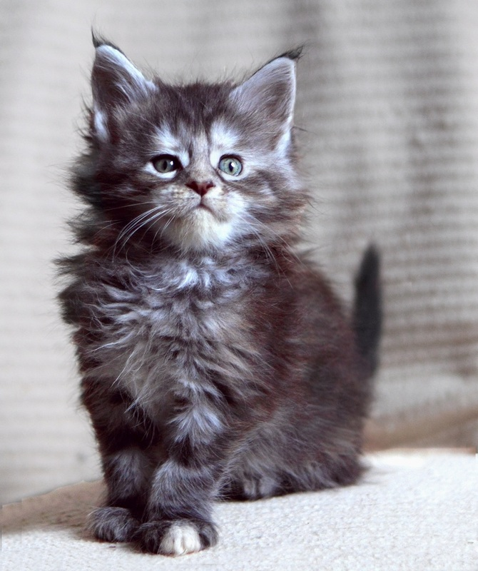 Image - LittleKit.jpg | Animal Jam Clans Wiki | FANDOM powered by Wikia