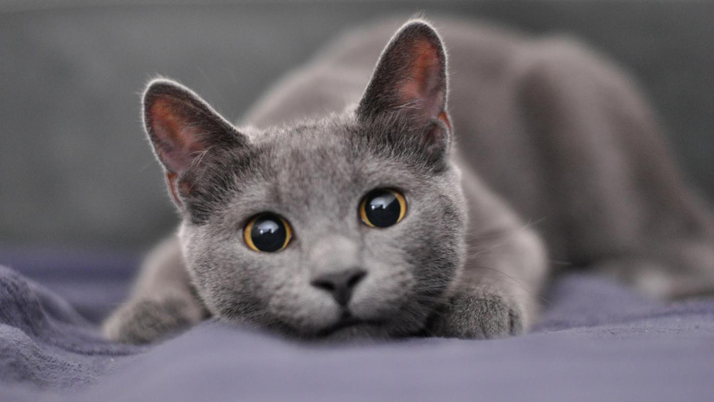 Good Name For Grey Cat With Green Eyes