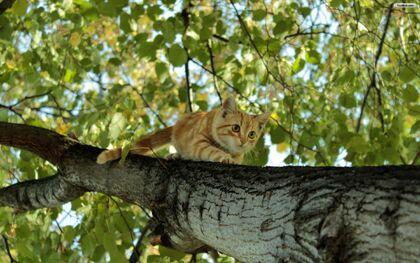 Cat-climbing-a-tree-wallpaper