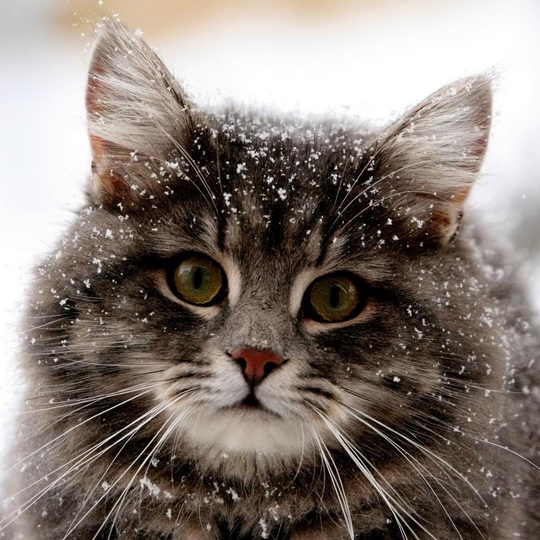 Description + Cat = Game! - Page 3 Latest?cb=20161029115315