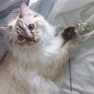 Aesthetic-cat-cute-flowers-Favim.com-4907683