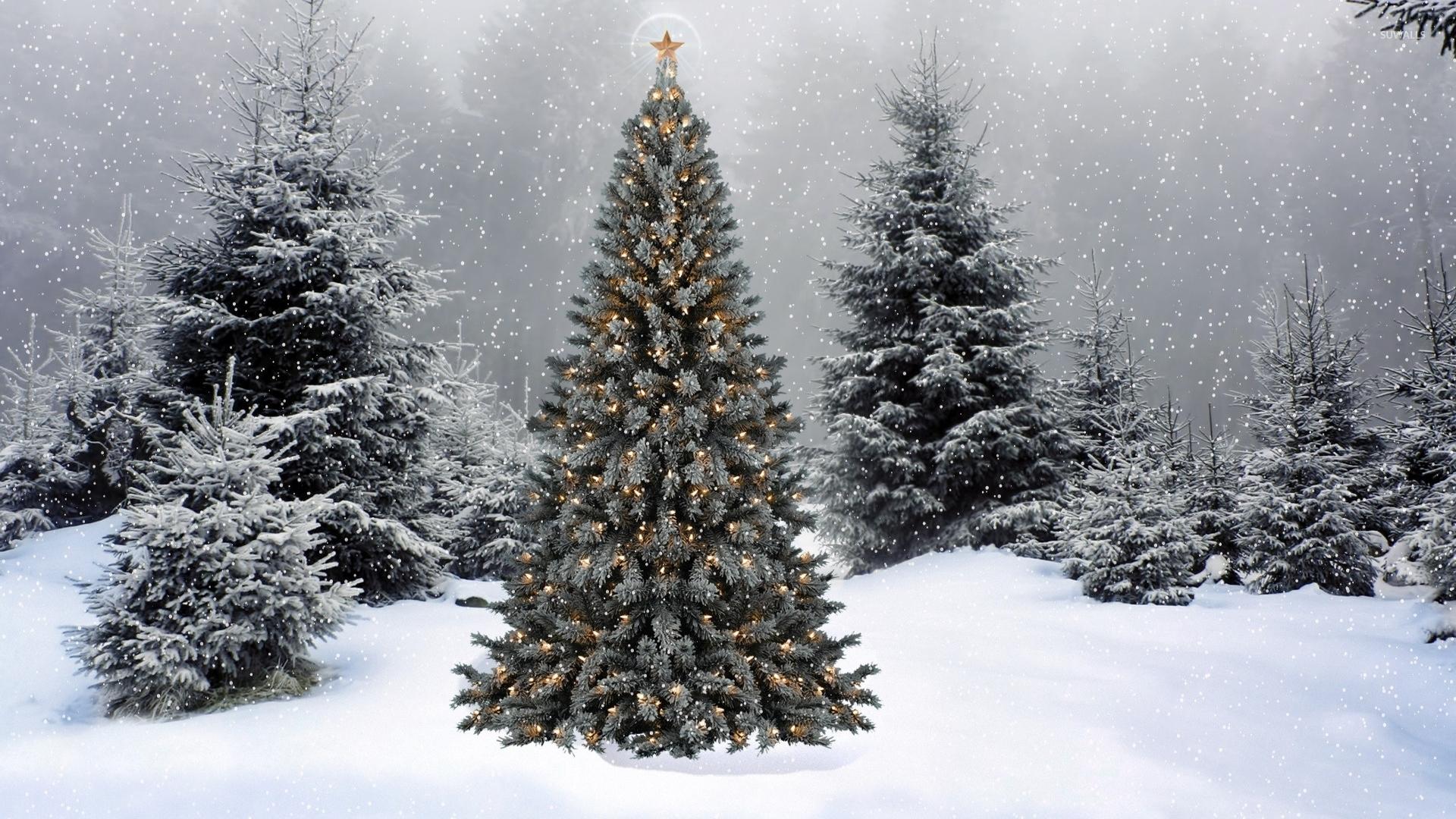 Image - Snow-falling-on-the-christmas-tree-50819-1920x1080.jpg ...