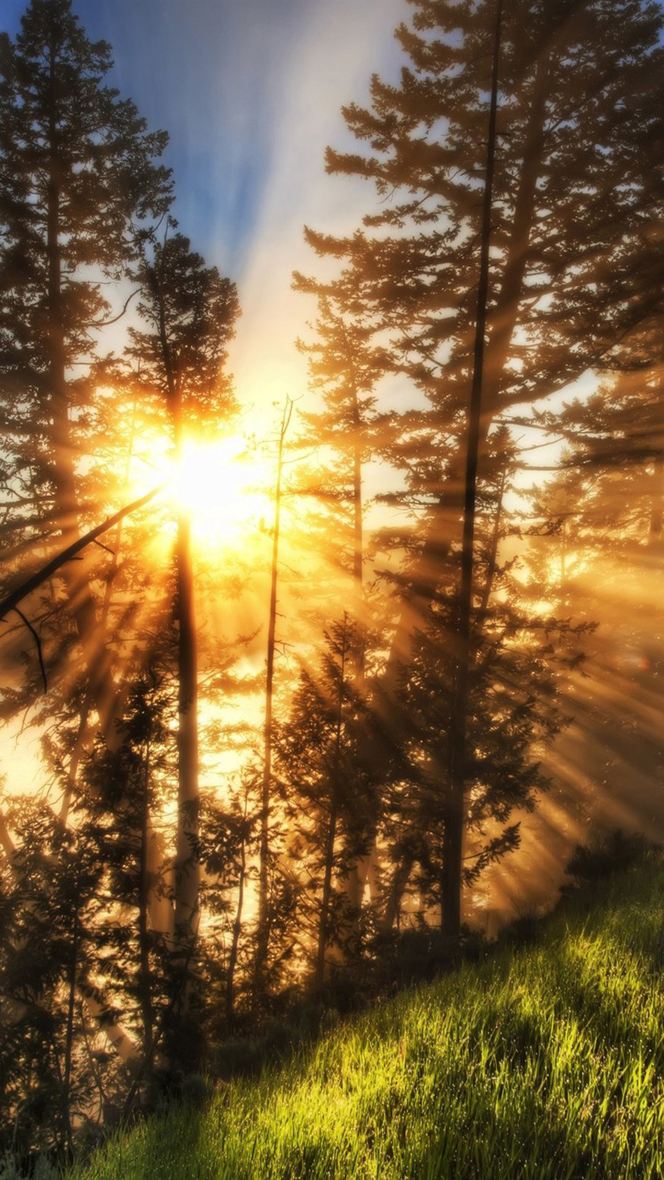 image - morning-sunbeams-beautiful-natural-scenery | animal jam