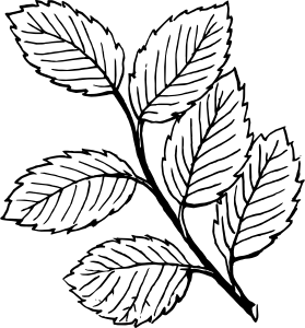 image f51aca75142474016f6057fdd72d8529 jungle leaves clip art rh animal jam clans wikia com leaves clipart black and white grape leaves clipart black and white