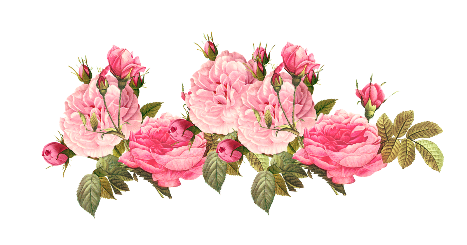 Image 4851255e0188e91462a811d5bdbfaeb1 vintage pink roses pink 4851255e0188e91462a811d5bdbfaeb1 vintage pink roses pink roses clipart tumblr 1600 839g mightylinksfo