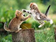 Playful-kittens-3