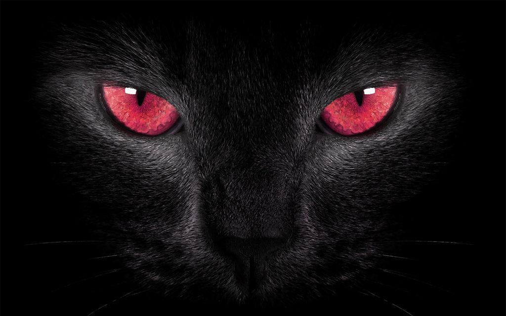 Image Black Cat Red Eyes By Welshdragon D7h6iic Jpg Animal Jam
