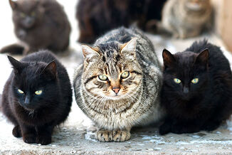 Lolgroup-of-cats-shutterstock-71609743