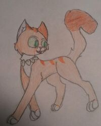 GingerPaw Traditional