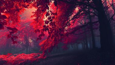 Red-forest-26750-1920x1080