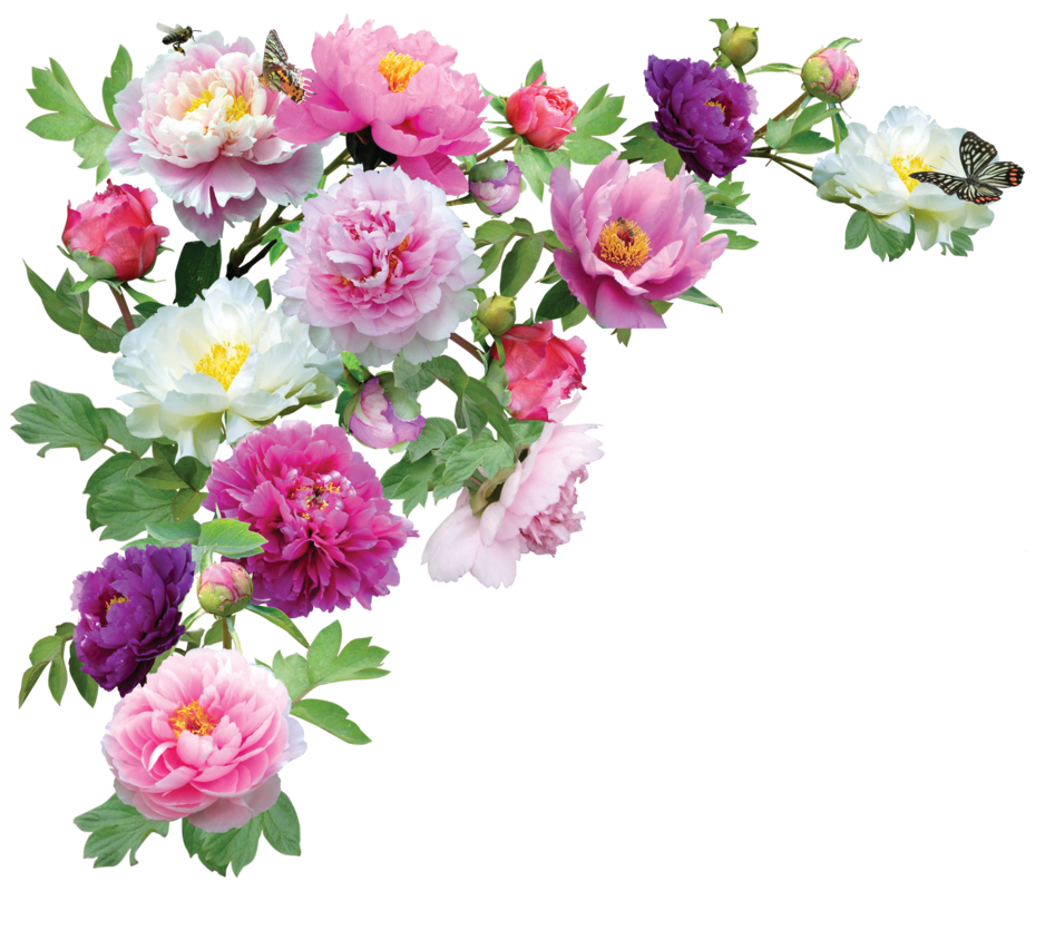 Image peonies by kmygraphic d6reb1mg animal jam clans wiki current 0255 december 25 2016 izmirmasajfo