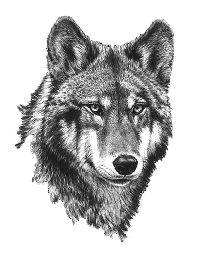 Commission: Wolf Mates X by jocarra on DeviantArt |White Wolf And Black Wolf Art