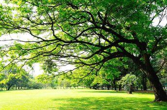 Sky Tree-Magicclan Territory