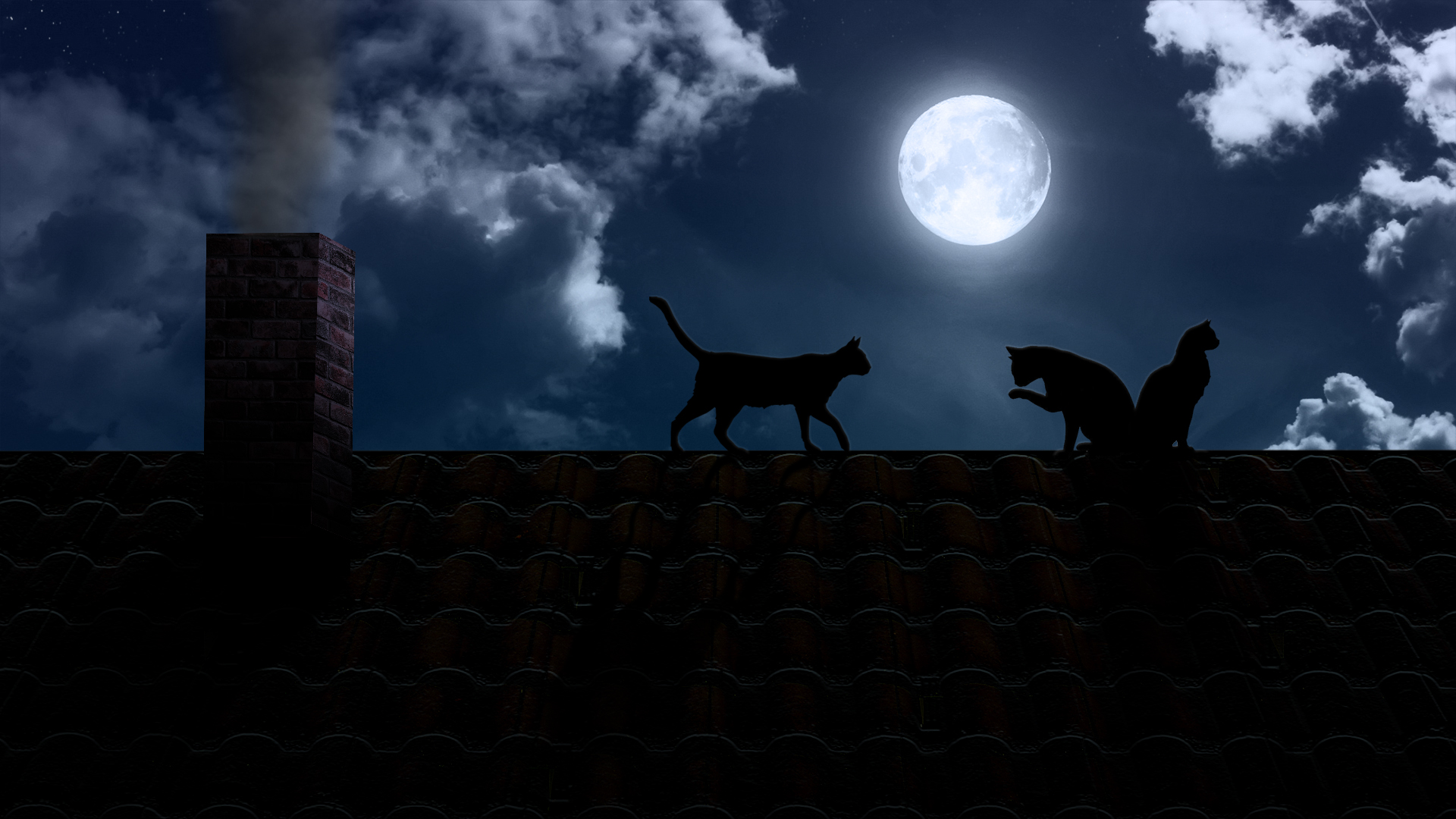 image - moon-light-cat-desktop-background | animal jam clans