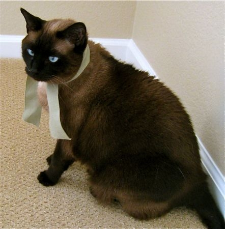 Image - Wonderful-siamese-cat-dark-along-with-brown-cats ...