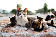 Cat-And-Kittens-Outsixde-Web