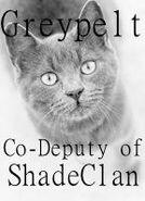 Greypelt, Co-Deputy of ShadeClan