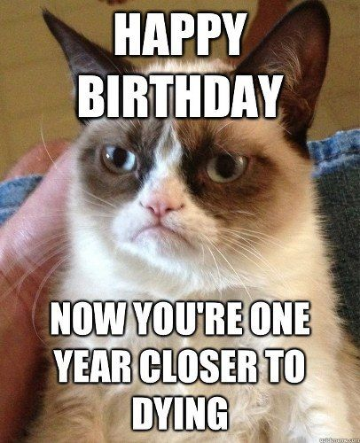 latest?cb=20160902192432 image top 30 funny animal memes and quotes cute pics jpg