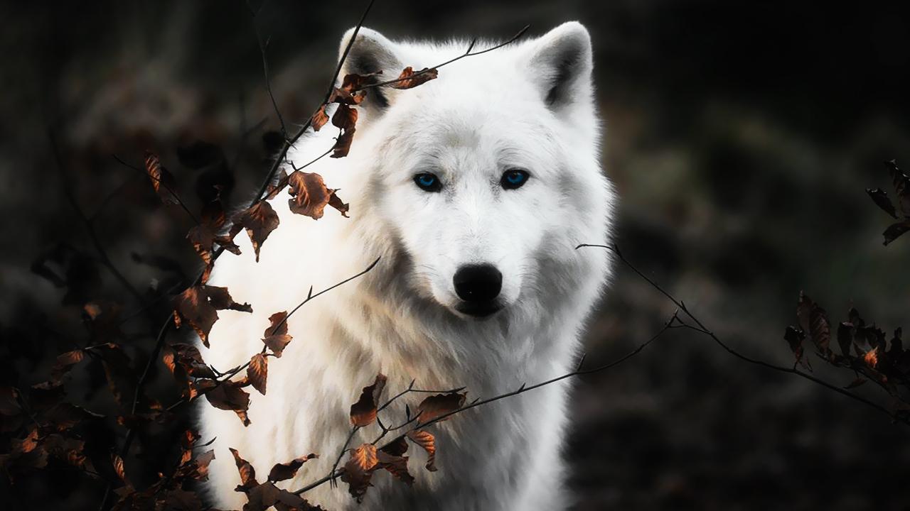Celerity (VTM) | White Wolf | FANDOM powered by Wikia
