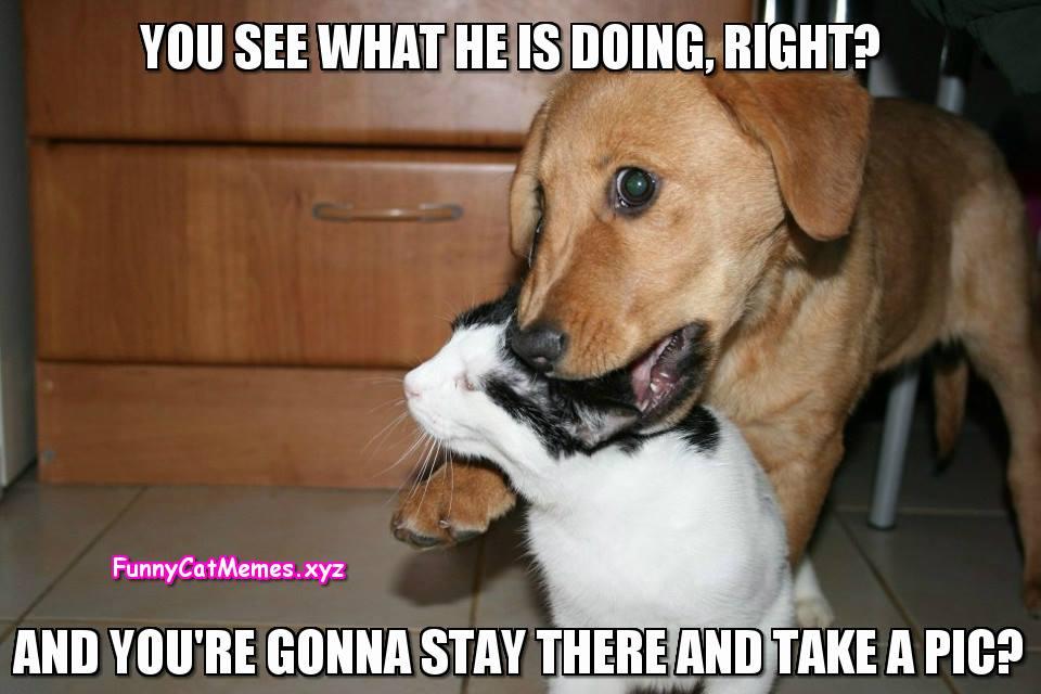 Cat And Dog Funny Cat Memes Jpg