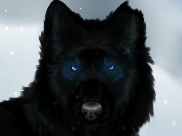 File:That black wolf by phoenix19xp-d737h9f.jpg