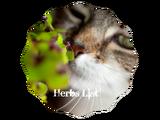 ArrowClan/Medic Herbs List