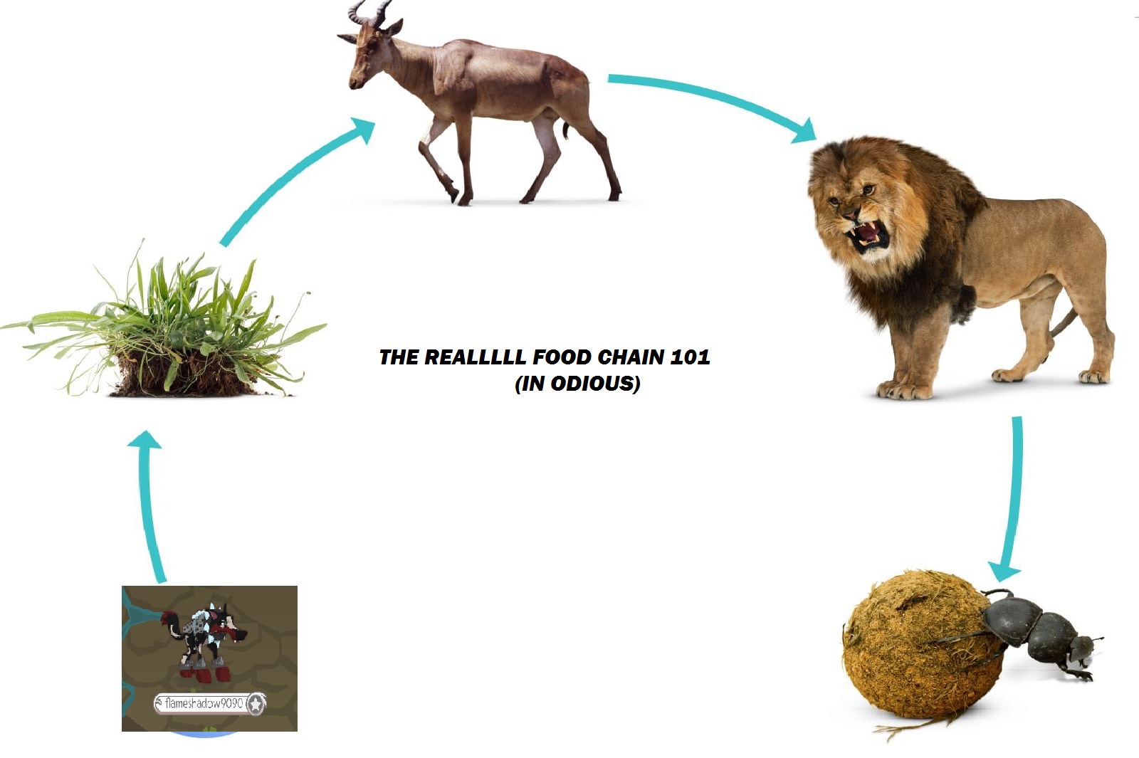 Image - THE rEAL FOOD CHAIN.png | Animal Jam Clans Wiki ...