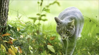 Cat-in-the-forest