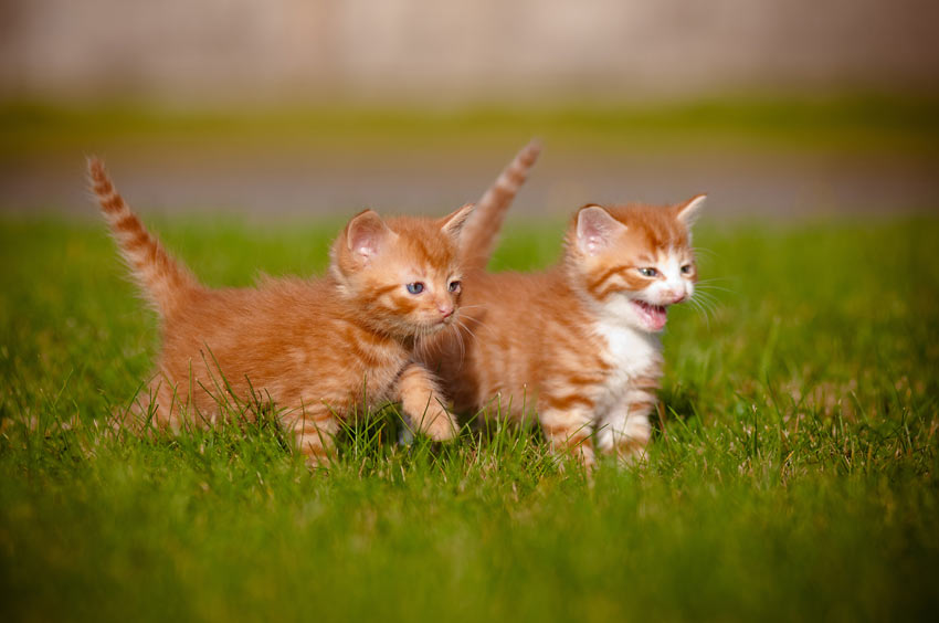 Image result for kittens outside