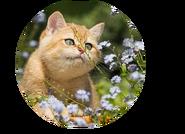 Medicine Cat Apprentice-1
