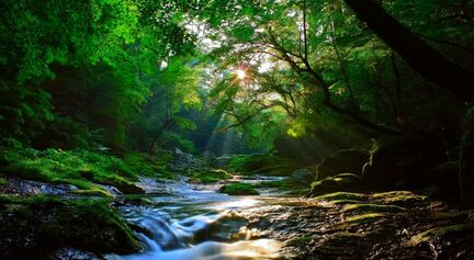 Beautiful-Forest-Sunlight-Amazing-View-HD-Wallpaper