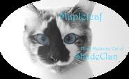 Mapleleaf, Head Medicine Cat of ShadeClan
