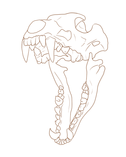 image wolf skull lineart fre1e by blue rakuen d6mgl51 png animal
