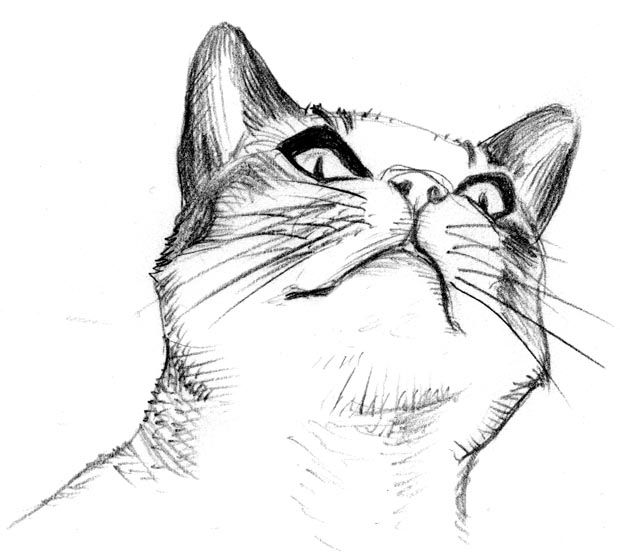 image 67b49c0713e7281049a09cf711503e39 cat sketch cat art jpg
