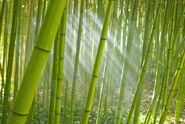 Somebamboo