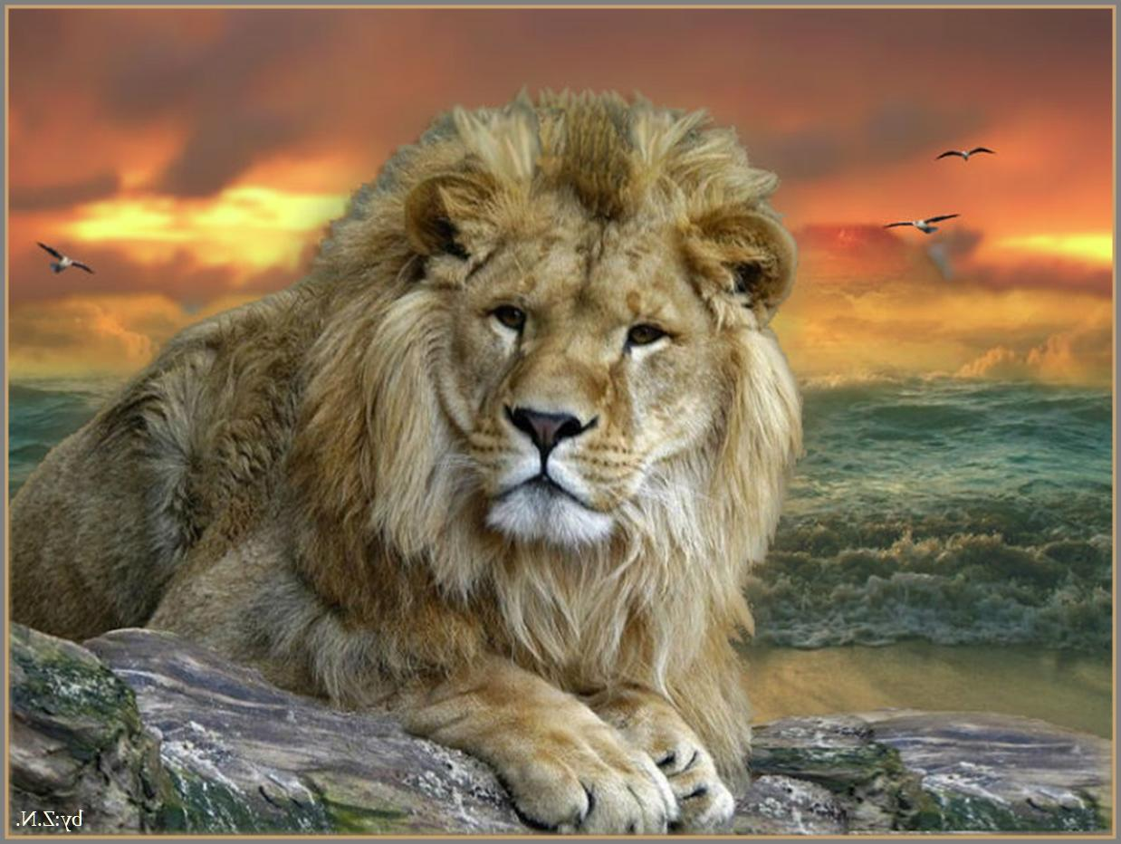 image - big cats sea lion sky nature clouds animals hd-wallpaper