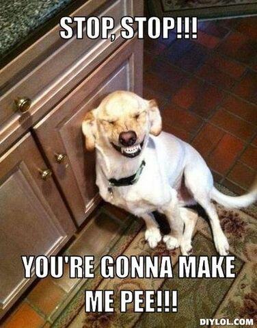 376?cb=20161117020213 image laughing dog meme generator stop stop you re gonna make me,Animal Jam Meme