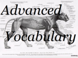 Advanced Vocabulary