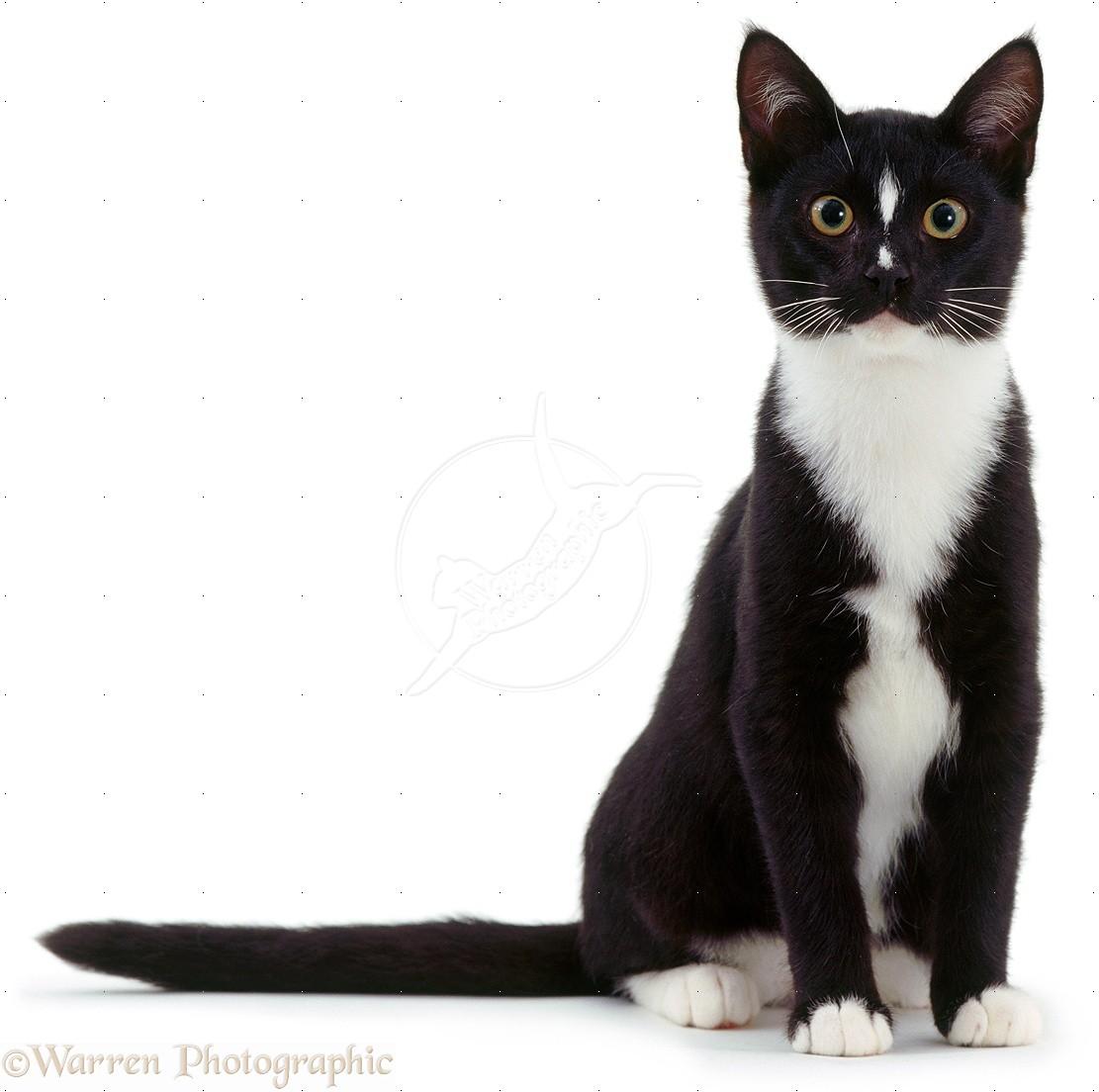 Warrior Cat Aj Wiki