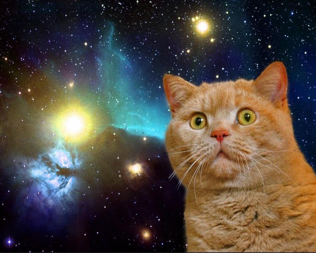 1280x1024 Cat In Space Wallpaper 1280x783