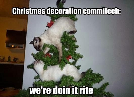 Image - Christmas-cat-meme-19123.jpg | Animal Jam Clans Wiki ...