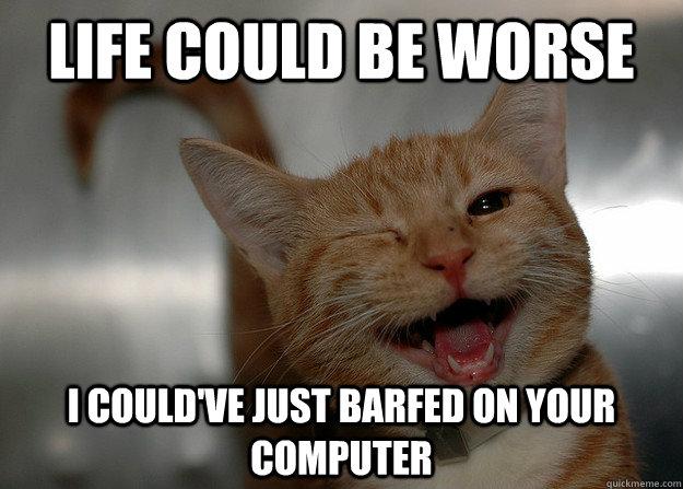 latest?cb=20160316050428 image funny cat meme cheer up 4 jpg animal jam clans wiki,Cheer Up Meme