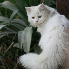 Medicine Cat Nat
