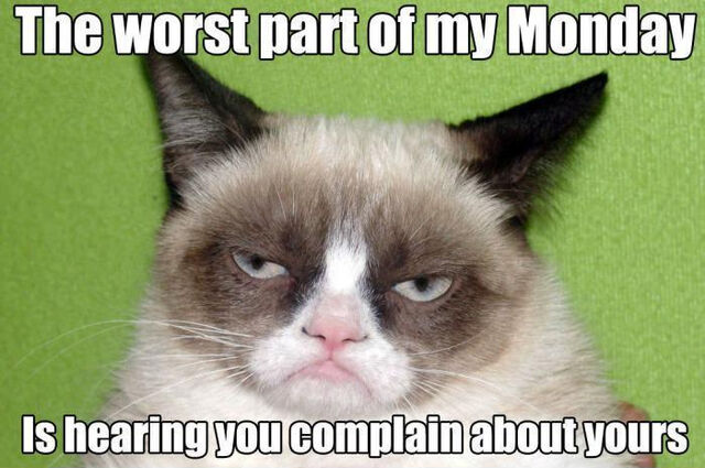 640?cb=20160904113323 image 002 best grumpy cat memes jpg animal jam clans wiki,Animal Jam Meme
