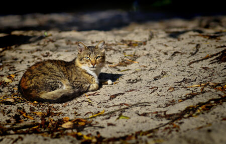 Cat-1335645 orig