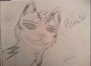 Pinestar by Pinestar
