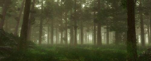 Scwoodlands