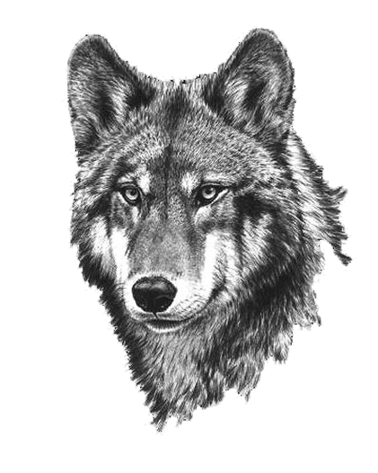 Black Wolf Canvas Multiple Sizes Wall Art Poster Print ... |White Wolf And Black Wolf Art
